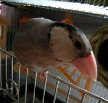 20090412-1.JPG