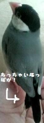 20091107093618.jpg