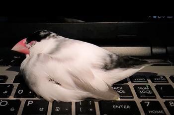 キーボードで眠るpng.png
