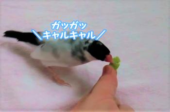 枝豆.png